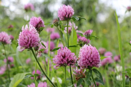 Best Herbs For Fertility